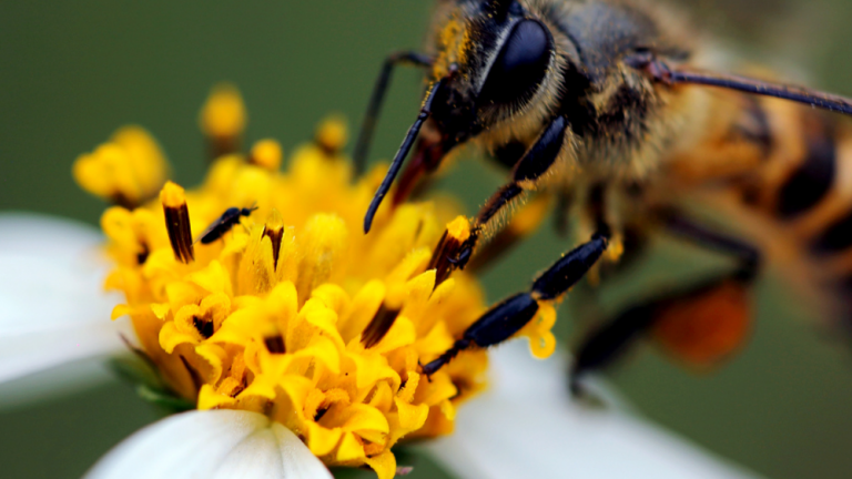 7 Common Allergies People Live With Daily